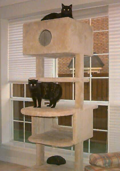 Philip 39 s cats and kitty condo for Design your own cat tree